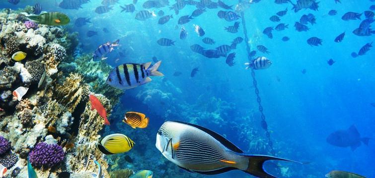 Heavy Metals in Fish