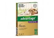 Advantage Cats Over 4kg Large Purple 6 Pack
